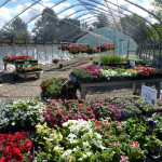 annual_greenhouse
