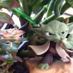yoda_succulent02