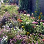 annual_gardenbed