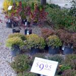 shrubs_overstock